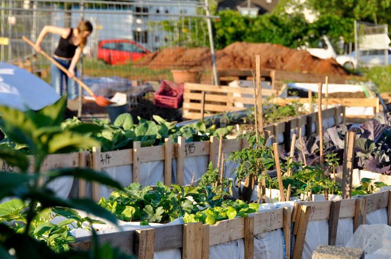buch urban gardening ber die r ckkehr der g rten in die stadt. Black Bedroom Furniture Sets. Home Design Ideas